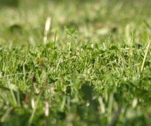Изобретение газонокосилки